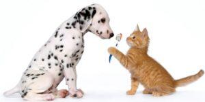catdogtoothbrushing